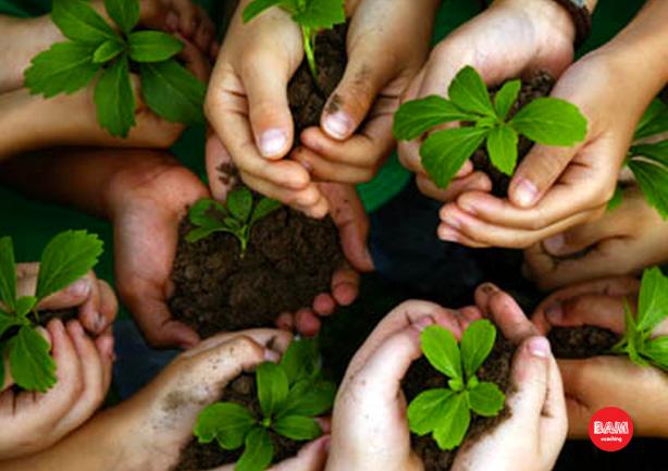 BAM voor bedrijven - BAM Coaching Amsterdam - handen met plantjes in aarde